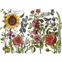 IOD Decor Transferfolie Botanist`s Journal