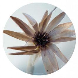 Label-R Muurcirkel flower naturel 40 cm