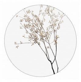Label-R Muurcirkel dry plants bruin 30 en 40 cm