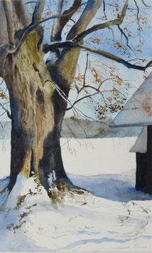 Älter als 5 Menschenleben (Linde in Rötenbach). Aquarell von Gabriele Koenigs (2014). Im Passepartout für Bilderrahmengröße 45 x 60 cm.