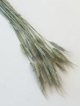 Getrocknetes Weizen natur