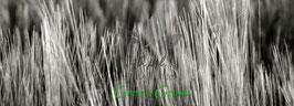 """""""Green Grass"""" Leinwandbild 90x30x2 cm"""