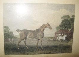 colorierter Biedermeier Druck von 1835, Real Yorkshire Pferde