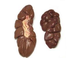 Runder nier