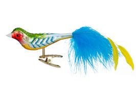 Regenbogenfink
