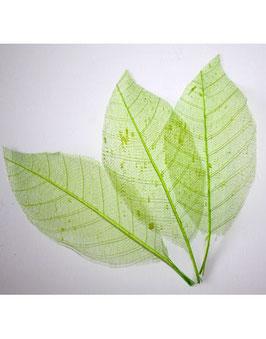 12 feuilles