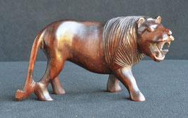 Lion :  Kenya