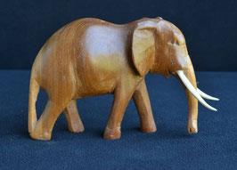 Éléphant :  Kenya