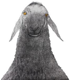Das stolze Schaf