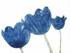 Tulpenkelch - Angebot
