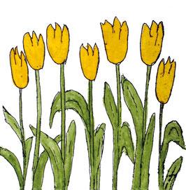 kleine Tulpen