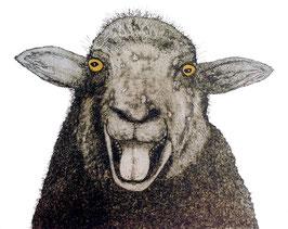 Das lachende Schaf