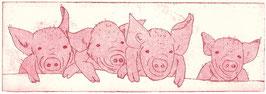 Schweinebande