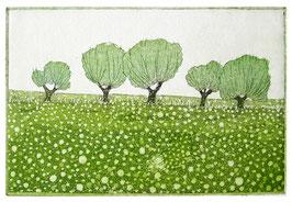 Bäume auf Sommerwiese