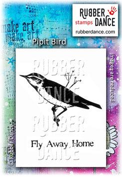 Pipit Bird