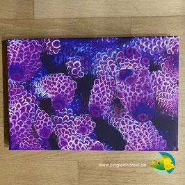 JR UV LIGHT CORAL PORN - ACROPORA (1/3)