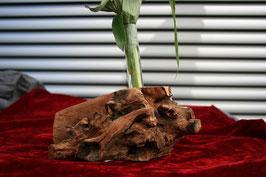 Zwetschgenholzwurzel
