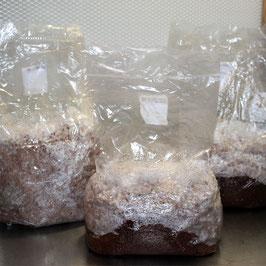 Holzsubstrat steril - 5 L im Microfilterbeutel