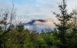 Der Altkönig im Nebel