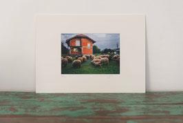 Briques et moutons - 12 x 18 cm (Fenêtre 11 x 16 cm)