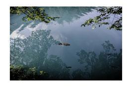 Poisson volant - 40 x 60 cm