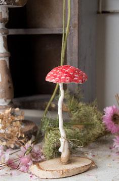 amanita muscaria tall umbrella head