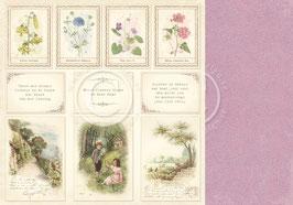 Linnaeus Botanical Journal, Images - Pion Design