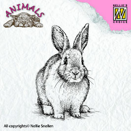 Rabbit - Nellies Choice