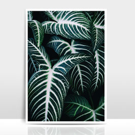 "A3 Artprint ""Jungle 2"""
