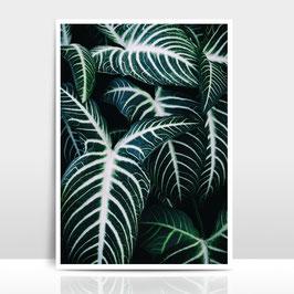 """A3 Artprint """"Jungle 2"""""""