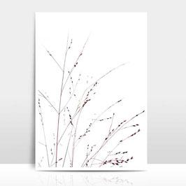 """A4 Artprint """"Gräser"""""""