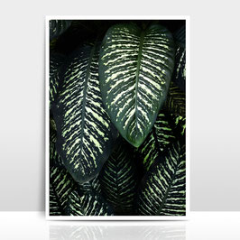 "A4 Artprint ""Jungle 1"""