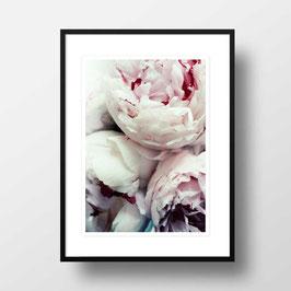 "A4 Artprint ""Pfingstrosen"""
