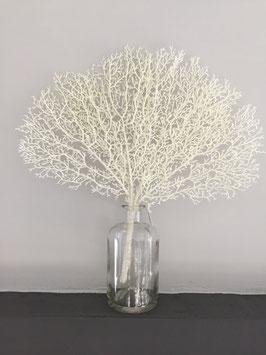 FormanoKorallenblatt weiss mit Glitter oder braun