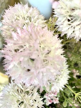 Blüte Pastell Distel zart in rose`weiss und weiss