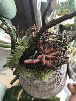 Formano Blüten auf Wurzel, auch zum Hängen