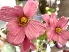 Formano Deko Blüte Cosmea in 3 leuchtenden Farben Frühling Sommer Blumen