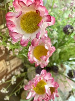 Wiesenblumen/Blütenzweig  rosa/weiss