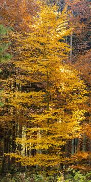 """Wetterfester Insektenschutz - Vorhang mit Motiv """"Herbst"""""""