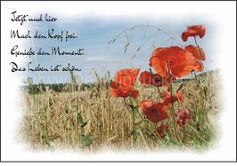 Postkarte mit Mohn-Motiv