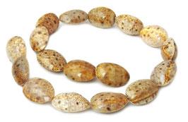 Luchs-Kaurischnecke  ca. 25x18 mm Perlen - Strang - Rarität