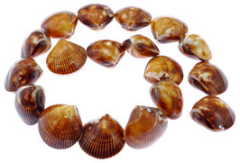 Goldbraune Herzmuschel Perlen ~22-24 mm ganze Schale - Strang