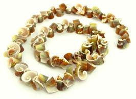 Kegelfechterschnecke Perlen kleine Spiralen ca. 6x10mm - Strang