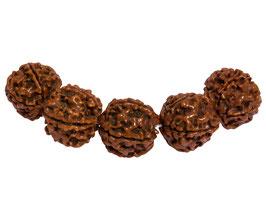 Rudraksha Kugeln 18-20 mm - 5 Samen Perlen