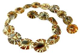 Schildkrötenschnecke Perlen ganze Schalen ca.18x22 mm - Strang - Rarität