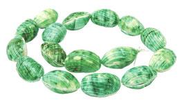Grüne Turban-Schnecke Perlen ganze Schalen ca. 25x15x14 mm - Strang - Rarität