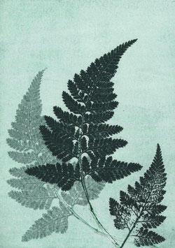 Grafikprint, Fern river green von Pernille Folcarelli