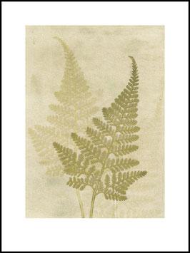 Grafikprint, Fern olive von Pernille Folcarelli