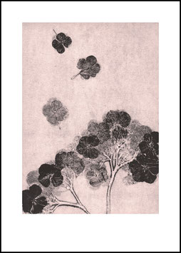 Grafikprint, Hortensia blush von Pernille Folcarelli