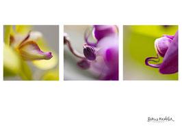 """Postkarte A6 """"Flower Power"""""""